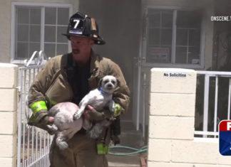 Bombero valiente salva a dos perros