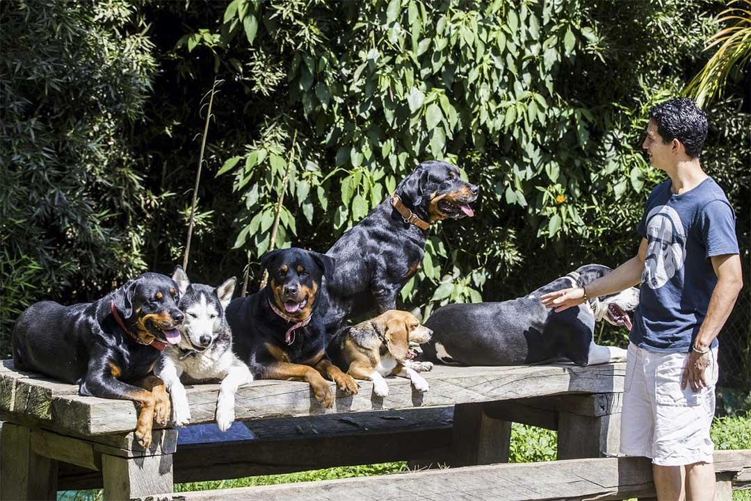 Como la perciben los perros la energia