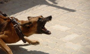 Cómo saber si tengo un perro agresivo