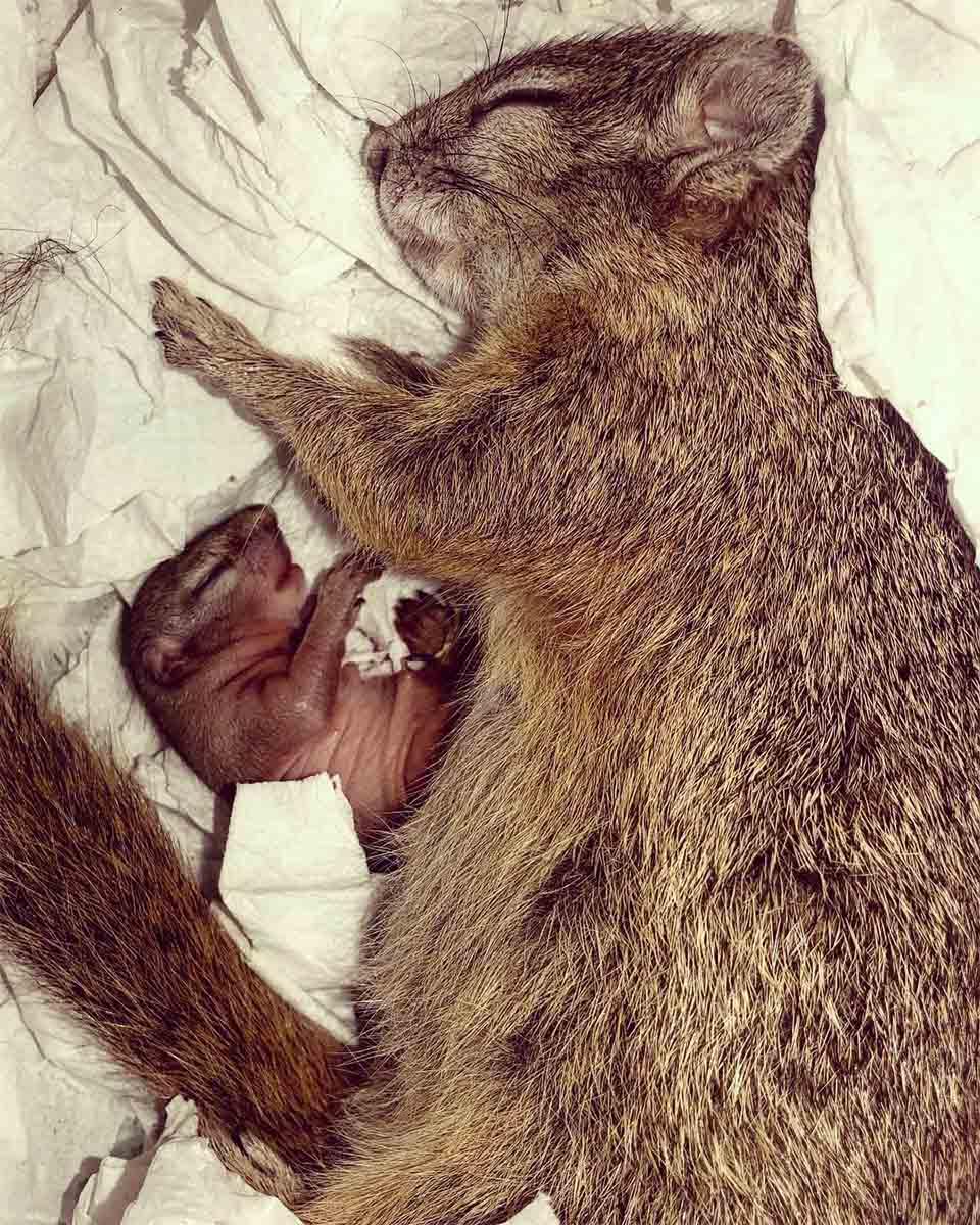 ardilla y bebé