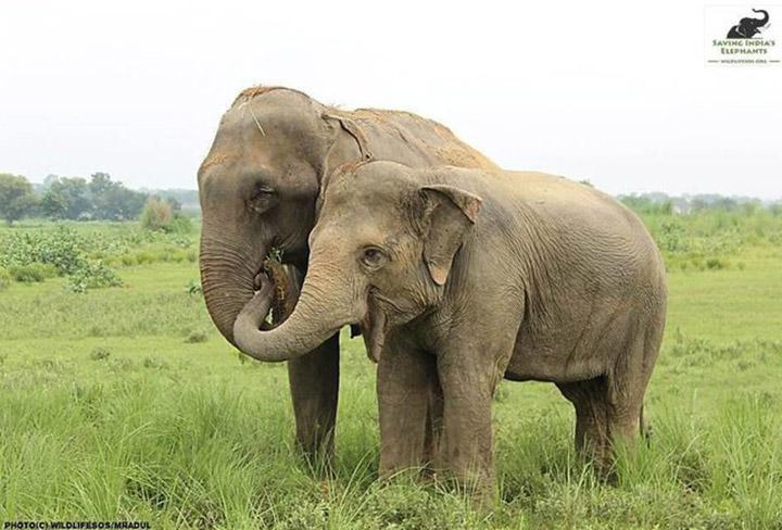Elefantes en libertad