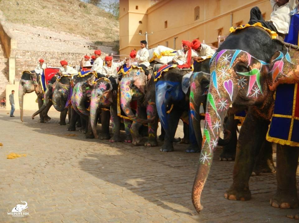 Elefantes para paseos
