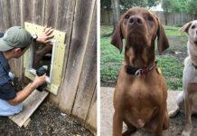 Familia construye puerta para perros en la cerca