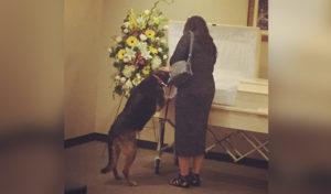 Funeraria permite visita de perro para despedirse