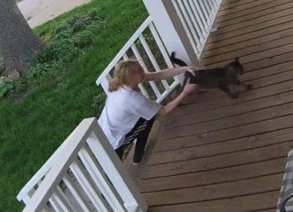Gato escapa de mujer que intenta llevarlo