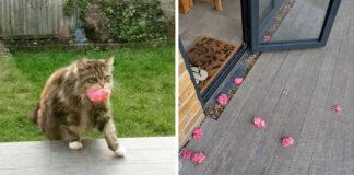Gato toma flores de su jardín y las lleva a su vecina