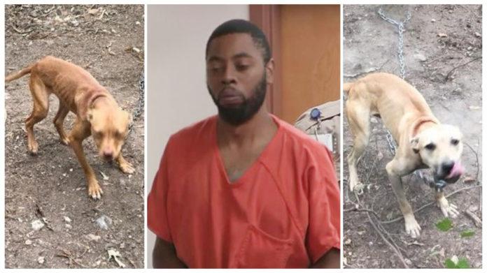 Hombre condenado a prisión por 214 cargos de crueldad animal