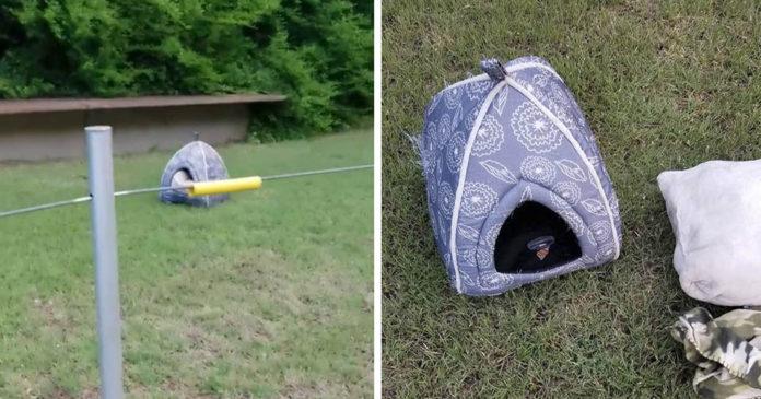 Mujer ve casita al lado del camino y habia un perrito abandonado