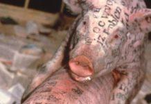 Museo de Guggenheim de Bilbao exhibirá animales vivos