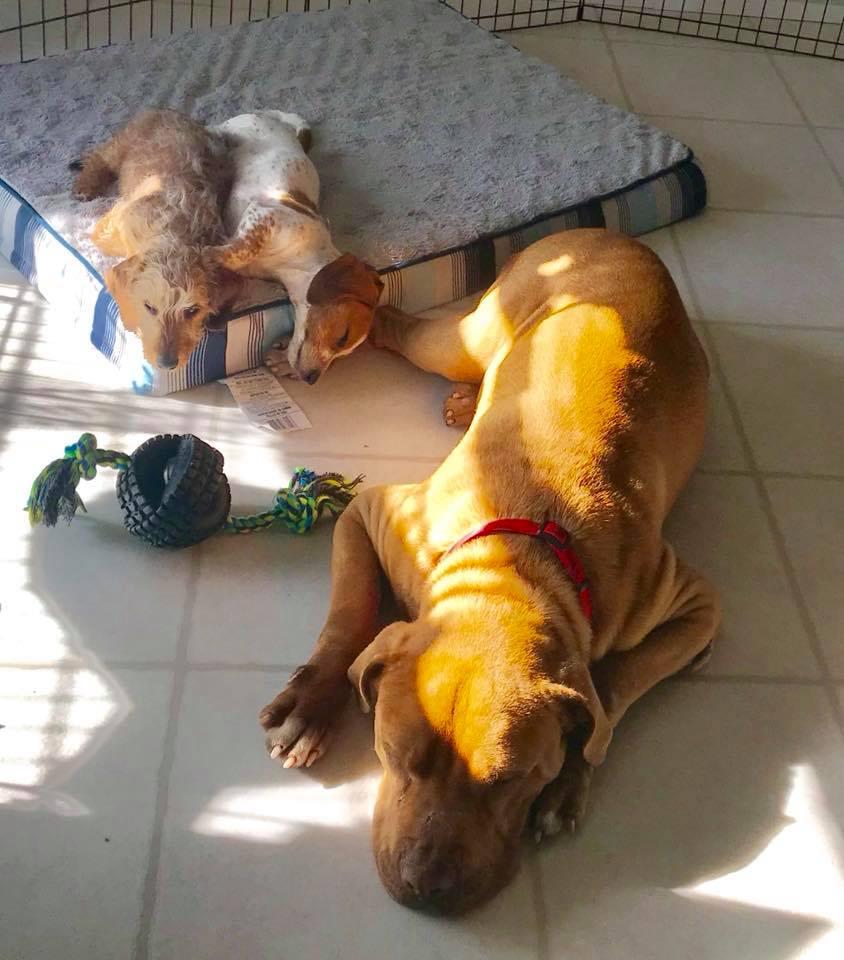 Neno y sus hermanos perros