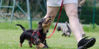 Pasear a un perro