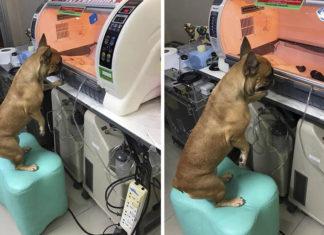Perrita cuida de cachorros prematuros en una incubadora