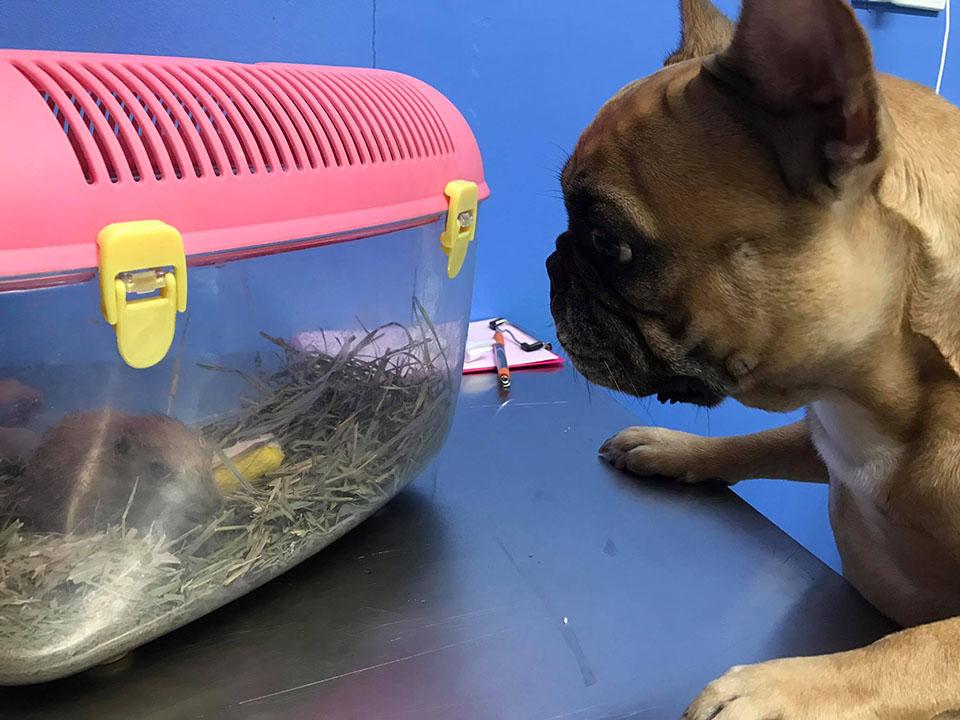 Perrita cuida hamster
