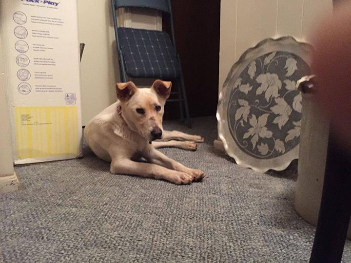 Perrita en la veterinaria