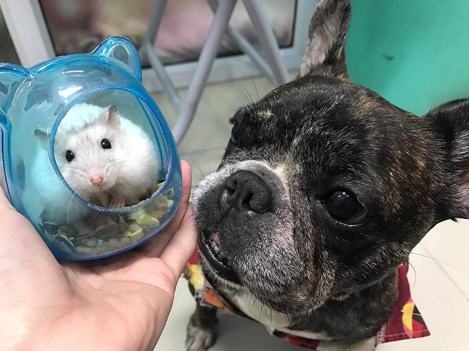 Perrito cuida hamster