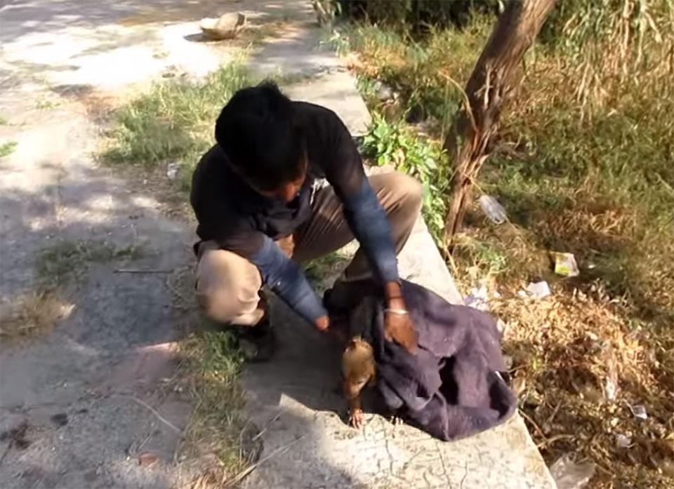 Perrito rescatado de un pozo