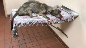 Perro en mal estado y con quemaduras es rescatado
