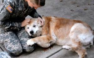 Perro llora cuando su mejor amiga regresa del ejercito