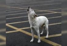 Perro no deja de aullar después de ser abandonado