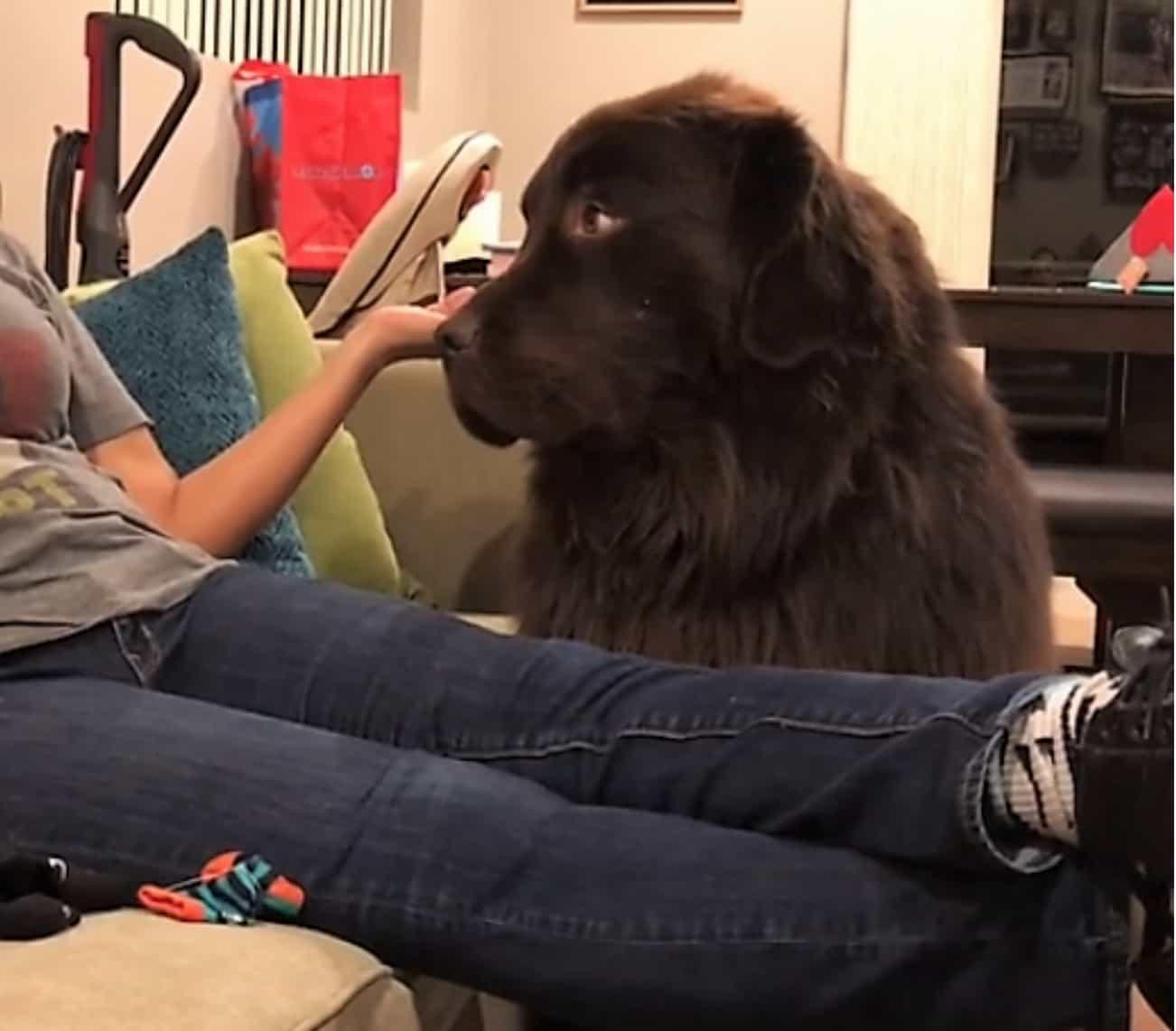 Perro no recibe disculpas