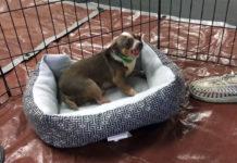 Perro rescatado obtiene su primera cama