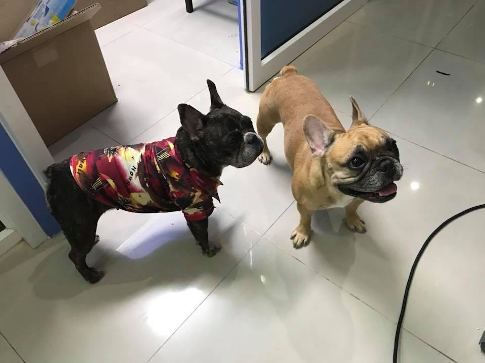 Perros en clínica veterinaria