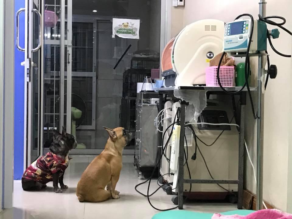Perros pendientes de cachorros
