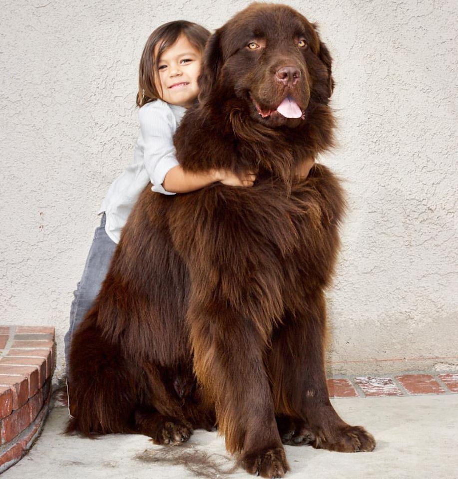 Ralphie y su hermano