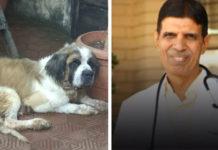9 perros hambrientos fueron rescatados
