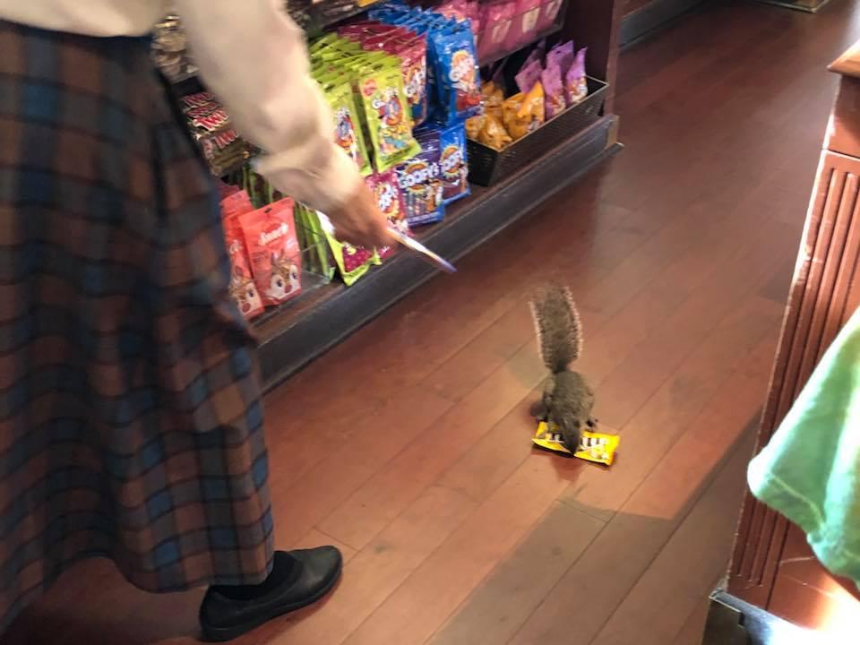 Ardilla en una tienda