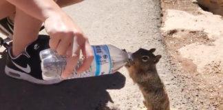 Ardilla sedienta toma de la botella de un turista