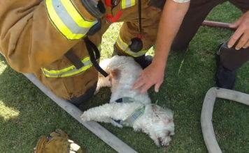 Bomberos salvan perro de casa en llamas