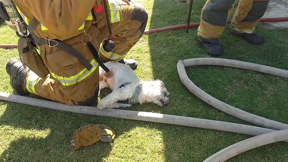 Bomberos salvan perro