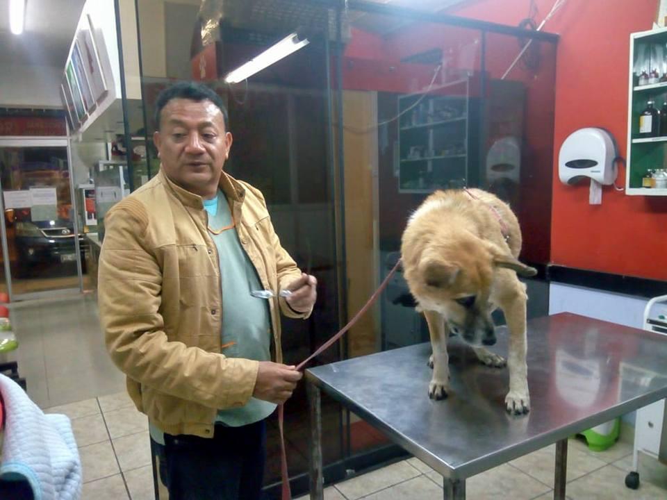 Bumer en el veterinario