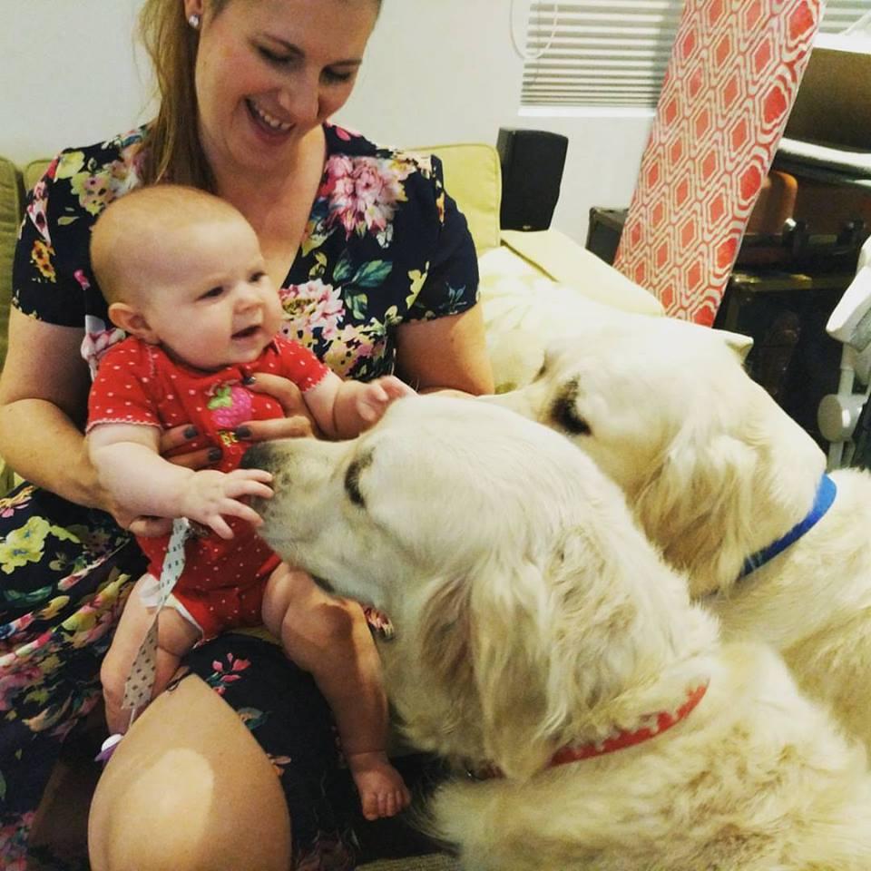 Chloe y sus perros