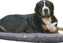 Cómo escoger camas para perros