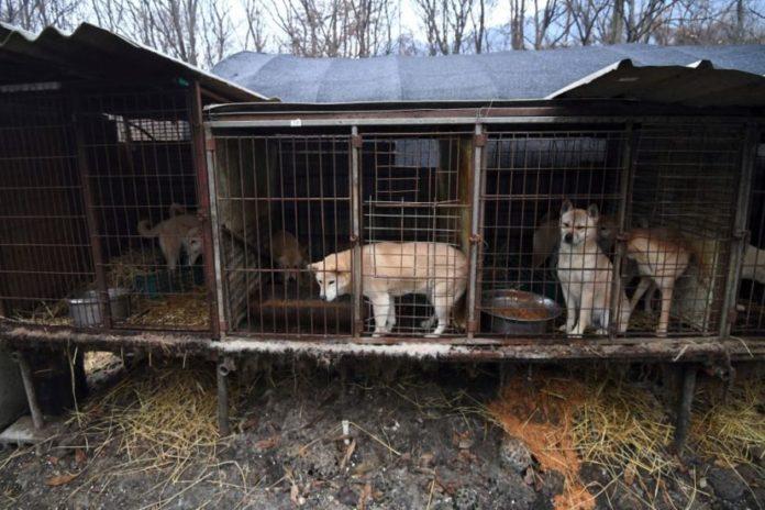 Corea del Sur a punto de prohibir la carne de perro