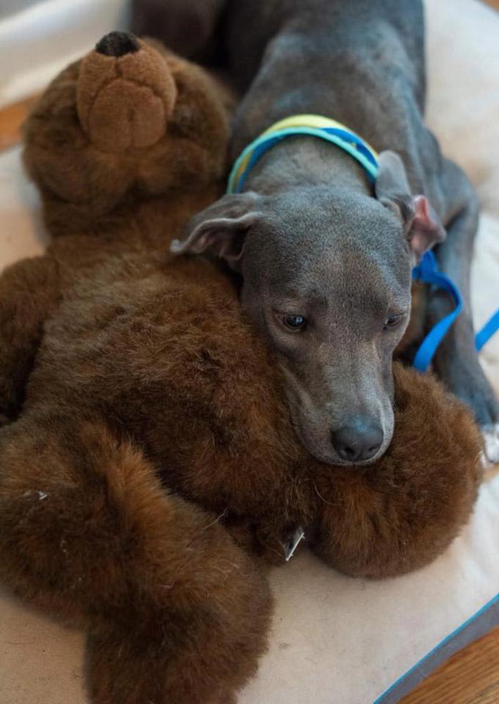 Ellie y su oso