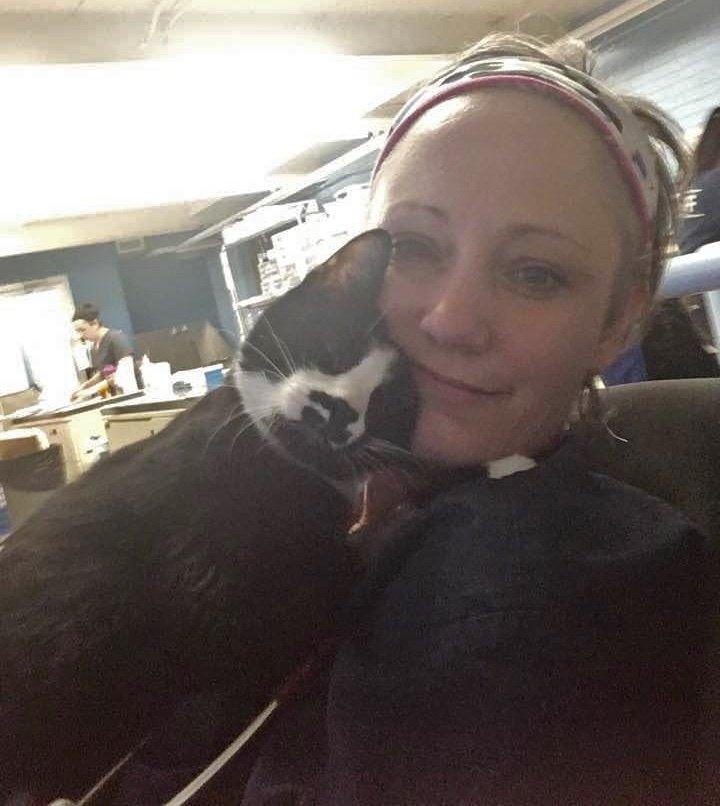 Gato abraza en el refugio