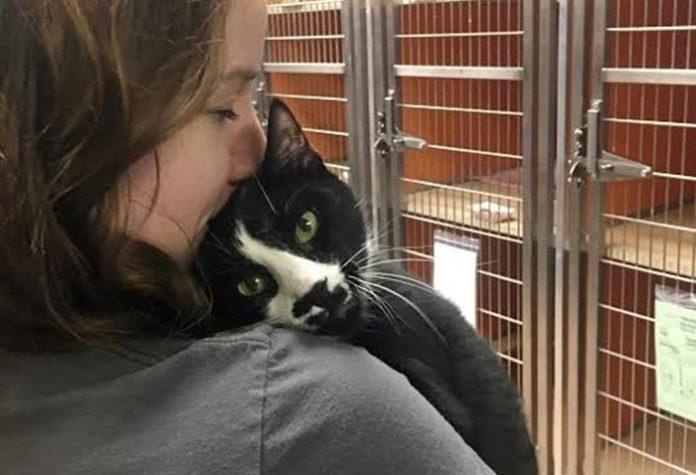 Gato del refugio ama dar abrazos a todos