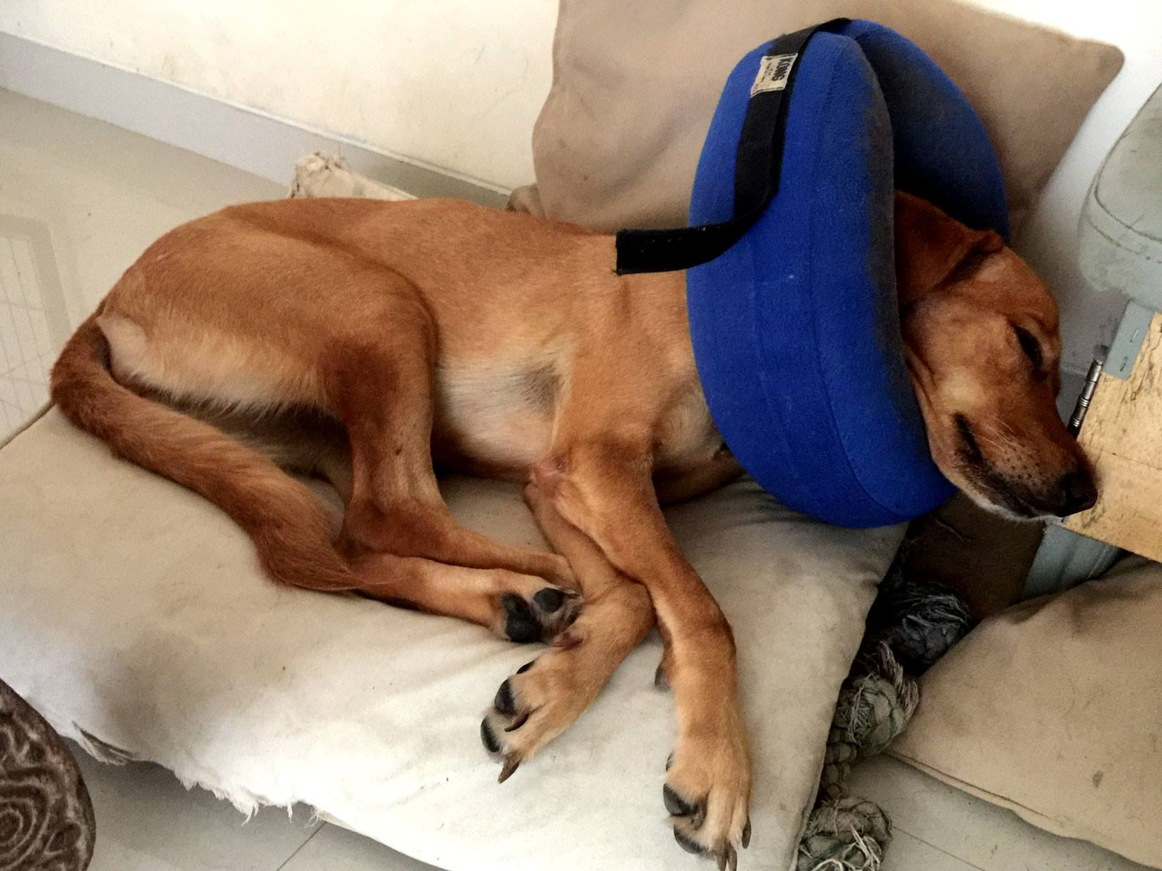 Goldie recuperada