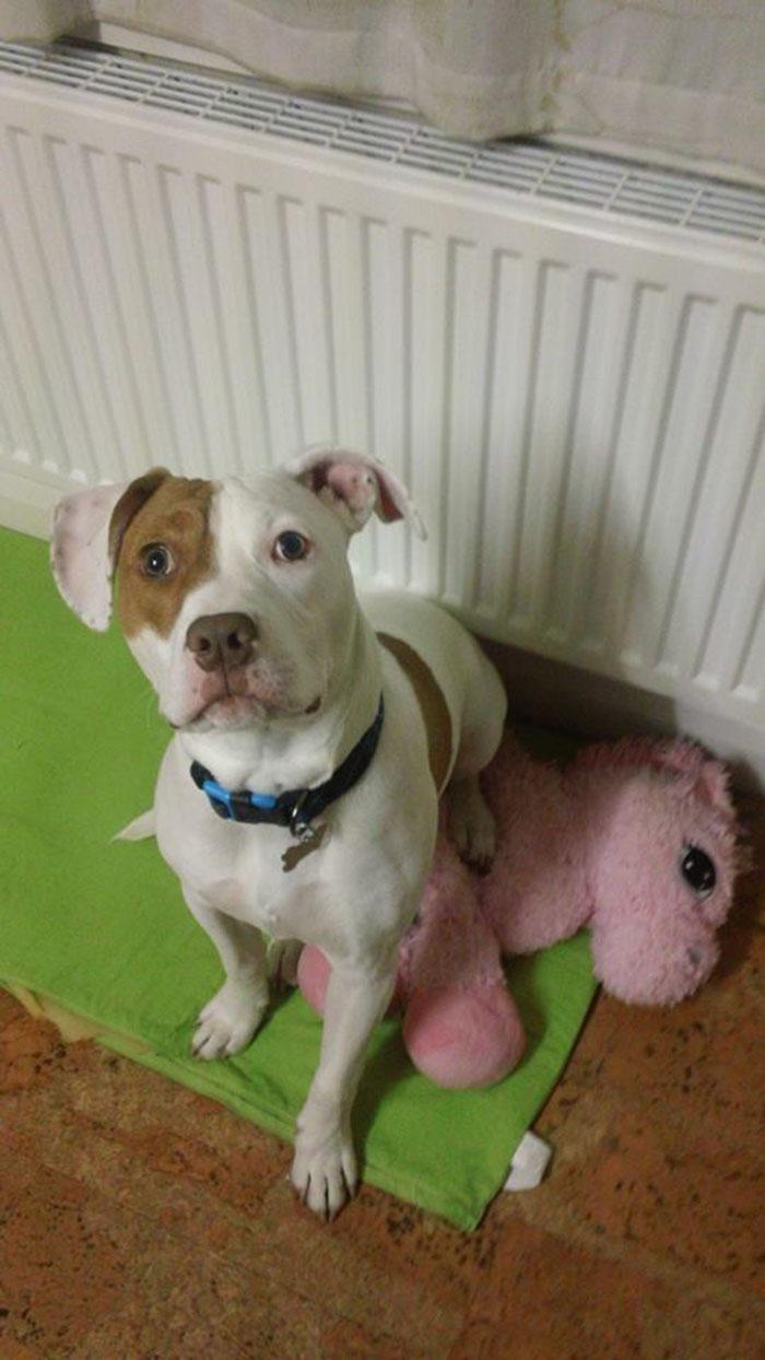 Ivor perro sordo