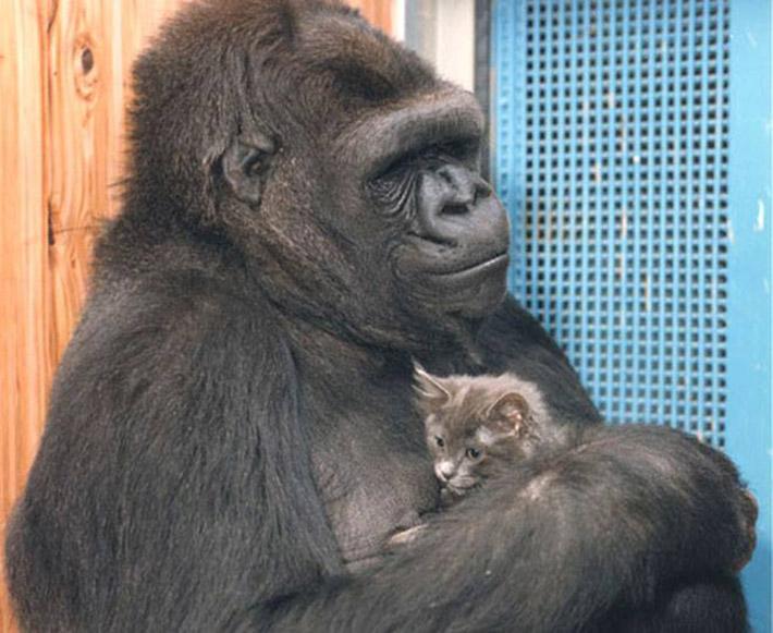 Koko y su gato