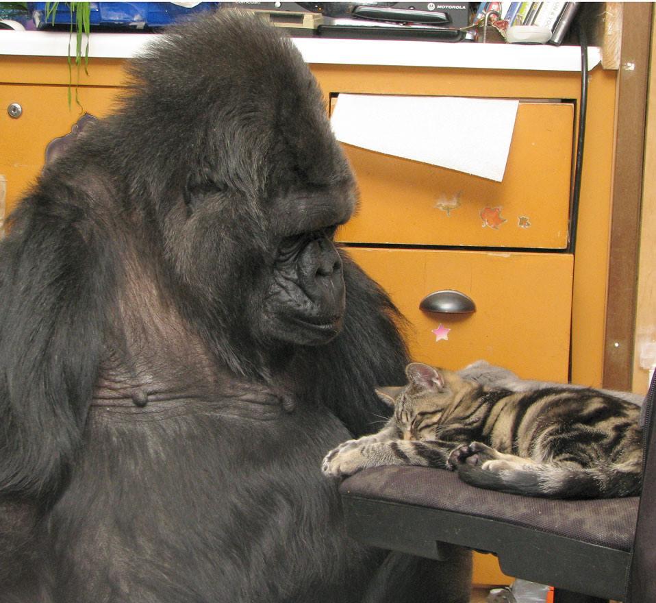 Koko y un gatito