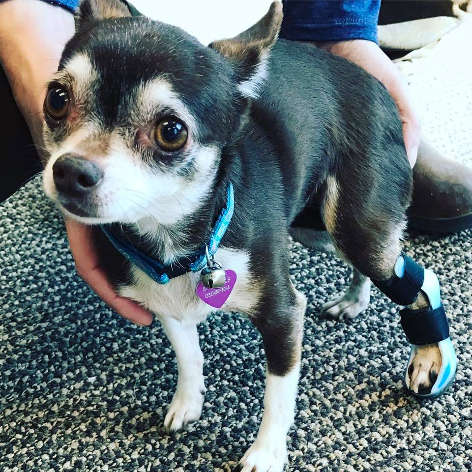 Perrito con prótesis