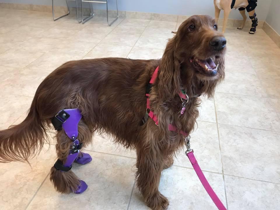 Perro con prótesis