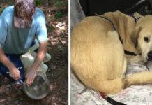 Perro estuvo con la cabeza atrapada por tres semanas