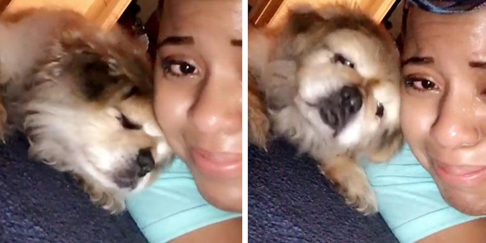 Perro mayor limpia las lágrimas de su mejor amiga