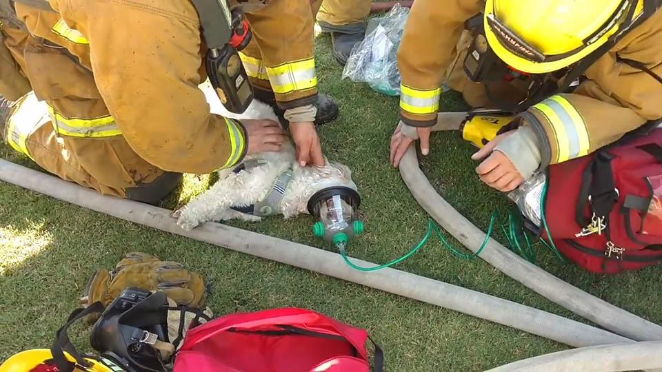 Perro rescatado de casa en llamas