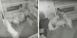 Perros ayudan a bebé a escapar para darles golosinas
